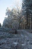 Floresta woodcutted manhã Imagem de Stock Royalty Free