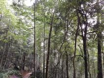 florestas fotos de stock royalty free
