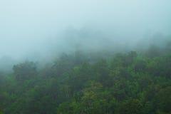 florestas Fotos de Stock