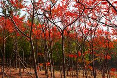 Florestas Fotografia de Stock