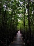 florestas Imagem de Stock