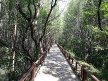 florestas Foto de Stock