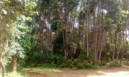 Florestas da paisagem Imagem de Stock