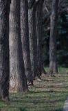 Florestas da plantação Imagem de Stock Royalty Free
