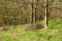 Florestas da primavera no campo inglês Fotos de Stock Royalty Free