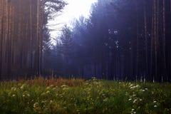 Florestas de Sibéria imagens de stock royalty free