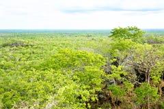Florestas do Brachystegia no parque nacional de Kasungu Imagens de Stock Royalty Free