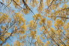 Florestas do outono Foto de Stock Royalty Free