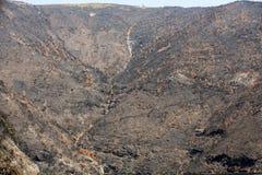Florestas do patrimônio mundial de Madeira destruídas terrivelmente por fogos em 2016 Algumas das árvores têm a vontade enorme da Fotos de Stock Royalty Free