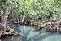 Florestas dos manguezais Imagens de Stock Royalty Free