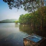 Florestas dos manguezais, lago Imagens de Stock