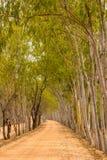 Florestas e estradas. Imagens de Stock