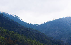 Florestas e montanhas Ligurian nas camadas imagem de stock