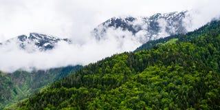 Florestas e panorama nevado das montanhas Foto de Stock
