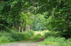 Florestas em maio Imagens de Stock Royalty Free