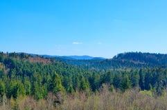 Florestas infinitas Foto de Stock Royalty Free