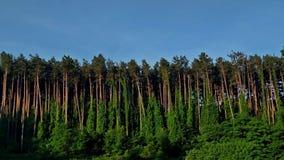 Florestas intencionais em Michigan Fotografia de Stock