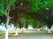 Florestas luxúrias Imagem de Stock Royalty Free