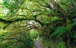 Florestas musgosos de Nova Zelândia fotos de stock