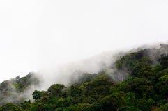 Florestas na névoa Fotografia de Stock