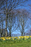 Florestas na primavera Fotografia de Stock Royalty Free