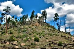 Florestas nacionais de Apache Sitgreaves, o Arizona, Estados Unidos imagens de stock