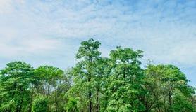 Florestas tropicais fotos de stock royalty free