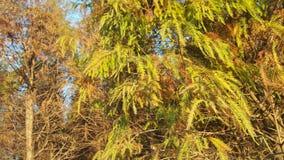 Florestas tropicais Fotografia de Stock Royalty Free