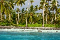 Florestas tropicais, palmeiras na praia na Colômbia, América Sur Fotos de Stock Royalty Free