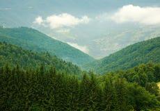 Florestas verdes da paisagem nas montanhas Imagens de Stock