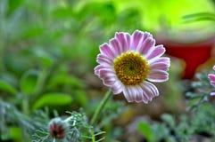 Floret луга Стоковые Изображения RF