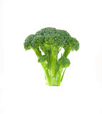 Floret of Brocolli Royalty Free Stock Photo