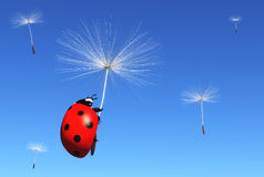 Floret carries a ladybug. A ladybug is clinging to a floret of a dandelion which is carried by the wind along with others florets, on a blue sky background Stock Photos
