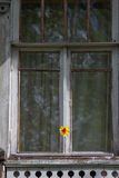 Floret on the Window Stock Images