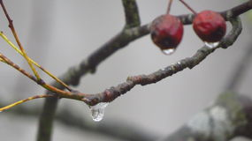 Florezca con descenso del agua en el invierno, Fussen, Alemania Fotos de archivo libres de regalías