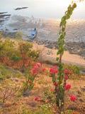 Florezca con la playa y el mar tropicales en la parte posterior, Labuan Bajo, Flores, Indonesia Imágenes de archivo libres de regalías