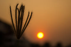 florezca cuando puesta del sol foto de archivo libre de regalías