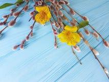 Florezca el alstroemeria, sauce de la ramita en un fondo de madera azul Imágenes de archivo libres de regalías