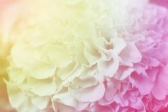 Florezca el fondo del color, efecto del estilo del vintage completan la foto Foto de archivo