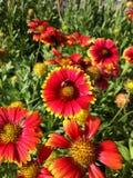 Florezca el fondo púrpura rosado rojo de la naturaleza de la abeja del verde amarillo hermoso Imagen de archivo libre de regalías