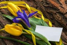Florezca el iris y los tulipanes con descensos del agua en fondo de madera Imágenes de archivo libres de regalías