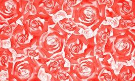 Florezca el modelo del fondo de los brotes hermosos de la rosa del rojo Foto de archivo