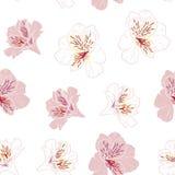 Florezca el modelo inconsútil con las flores rosadas y blancas hermosas del lirio del alstroemeria en la plantilla blanca del fon stock de ilustración