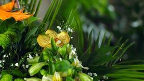 Florezca el ramo en los rayos de la luz, rotación, la composición floral consiste en el Strelitzia, crisantemo metrajes