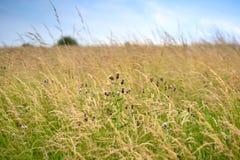Florezca en el campo con el fondo del cielo azul de la falta de definición Imagen de archivo libre de regalías