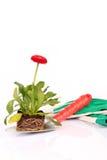 Florezca en la paleta que cultiva un huerto Imagenes de archivo