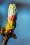 Florezca en un árbol ese las floraciones en primavera Foto de archivo