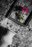 Florezca en un marco blanco y negro, y florero en de madera Foto de archivo libre de regalías
