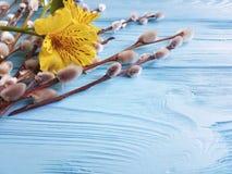 Florezca la estación del alstroemeria, sauce de la ramita de abril en un fondo de madera azul Fotos de archivo