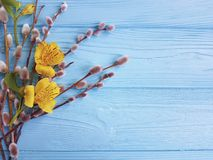 Florezca la estación del alstroemeria, sauce de la ramita en un fondo de madera azul Foto de archivo libre de regalías
